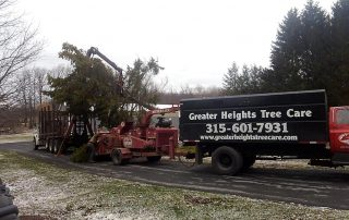 Greater Heights Tree Care Equipment Cutting trees