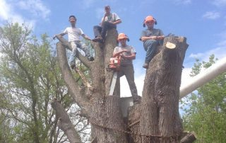 Greater Heights Tree Care Team on Cut tree
